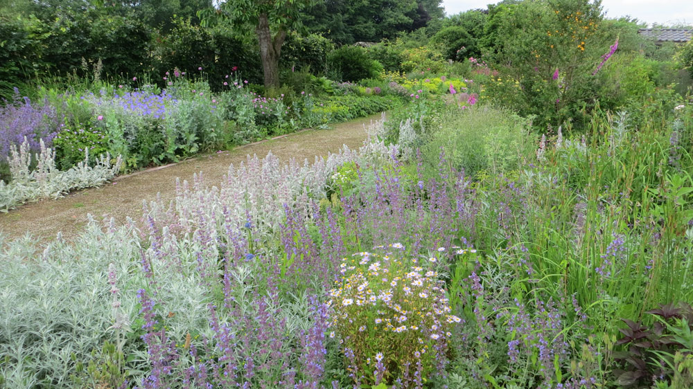 Long Border June 2017 Viller the Garden